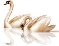 Лебеді схема для вишивання