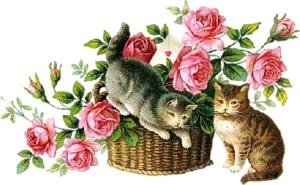 Котики з розами схема для вишивання