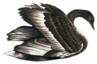 Чорний лебідь схема для вишивання