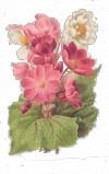 Розовий букетик схема для вишивання