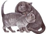 Котики схема для вишивання