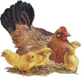 Курка з курчатами схема для вишивання