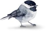 Пташка схема для вишивання