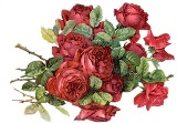 Червоні рози схема для вишивання