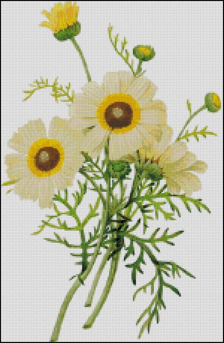 Схема для вишивання - літні квіти - Природа - Схеми вишивання ... 8db3f3a4d2060
