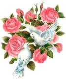 Голуби з квітами схема для вишивання
