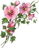 Кутик з розовими квітами схема для вишивання