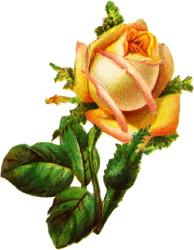 Жовта роза схема для вишивання