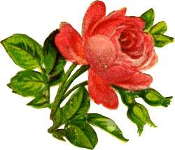 Червона роза схема для вишивання