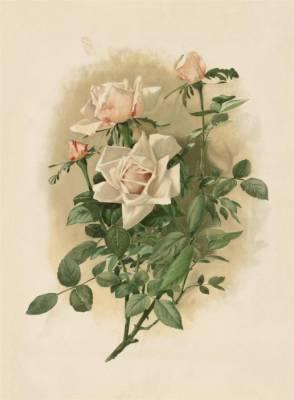 Галерея вінтажні листівки квіти