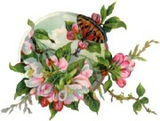 Метелик і розові квіти схема для вишивання