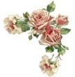 Ніжні рози схема для вишивання